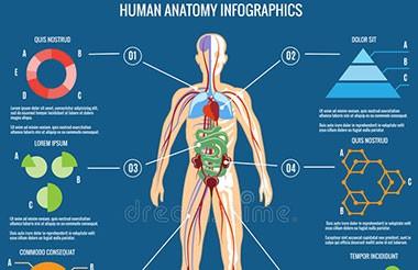 中南大学人体解剖学